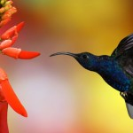 Google Hummingbird: What Does this Mean for Your Business?